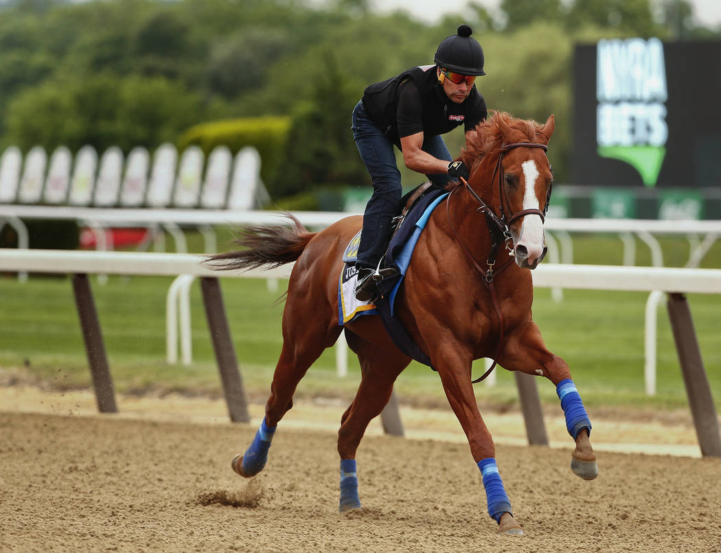 Triple Crown hopeful Justify gallops around the track during a workout at Belmont Park, Thursday, June 7, 2018, in Elmont, N.Y. Justify will attempt to become the 13th Triple Crown winner when he ...