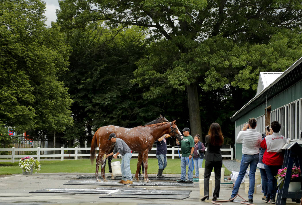 Triple Crown hopeful Justify is bathed by Carlos Martin after a workout at Belmont Park, Thursday, June 7, 2018, in Elmont, N.Y. Justify will attempt to become the 13th Triple Crown winner when he ...