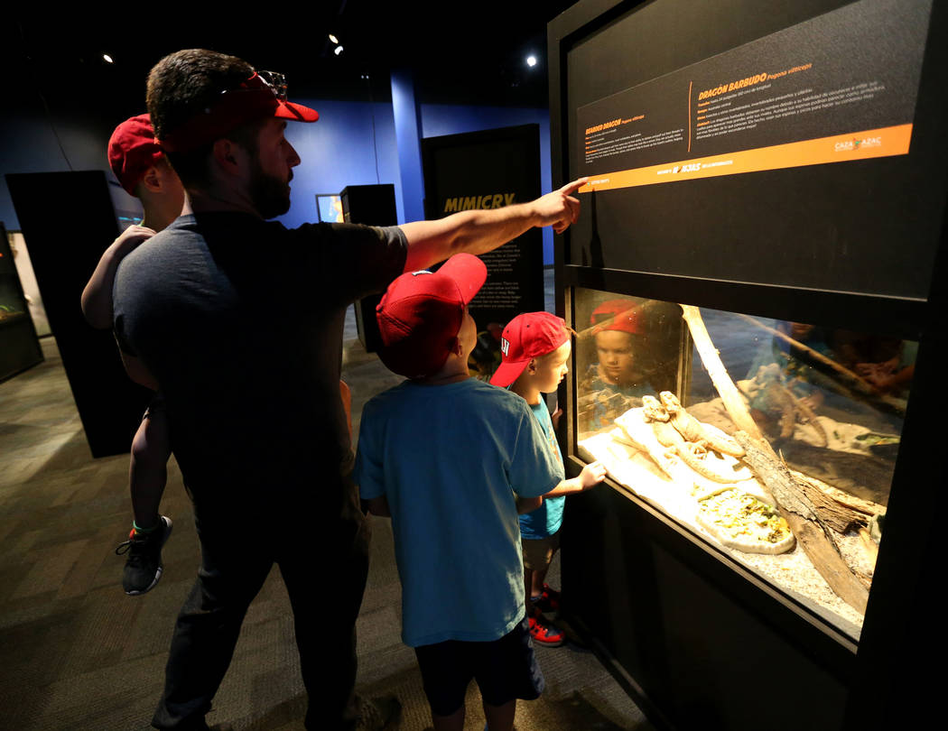 David McGauhey and his sons, from left, Daniel, 4, Elijah, 10, and Jackson, 5, check out a Bearded Dragon at NatureÕs Ninjas, the traveling exhibit the Las Vegas Springs Preserve, Monday, Jun ...