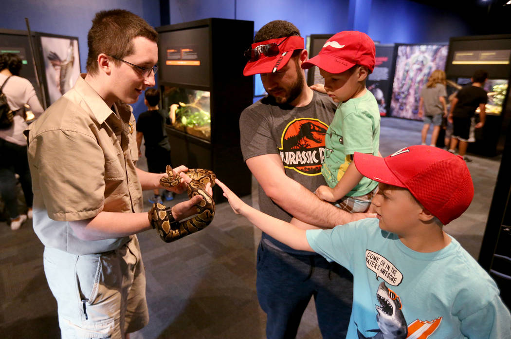 Zookeeper Cameron McSheffrey shows a Ball python to David McGauhey and his sons Daniel, 4, and Elijah, 10, at NatureÕs Ninjas, the traveling exhibit the Las Vegas Springs Preserve, Monday, Ju ...