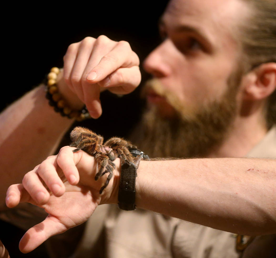 Head Zookeeper Shawn Adderley shows Chilean rose hair tarantula during a show at NatureÕs Ninjas, the traveling exhibit the Las Vegas Springs Preserve Monday, June 11, 2018. K.M. Cannon Las V ...