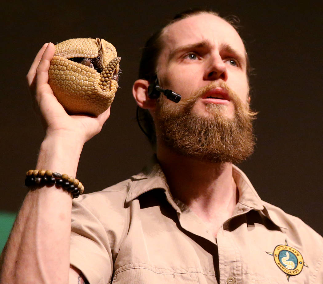 Head Zookeeper Shawn Adderley shows Brazilian three-banded armadillo during a show at NatureÕs Ninjas, the traveling exhibit the Las Vegas Springs Preserve Monday, June 11, 2018. K.M. Cannon ...