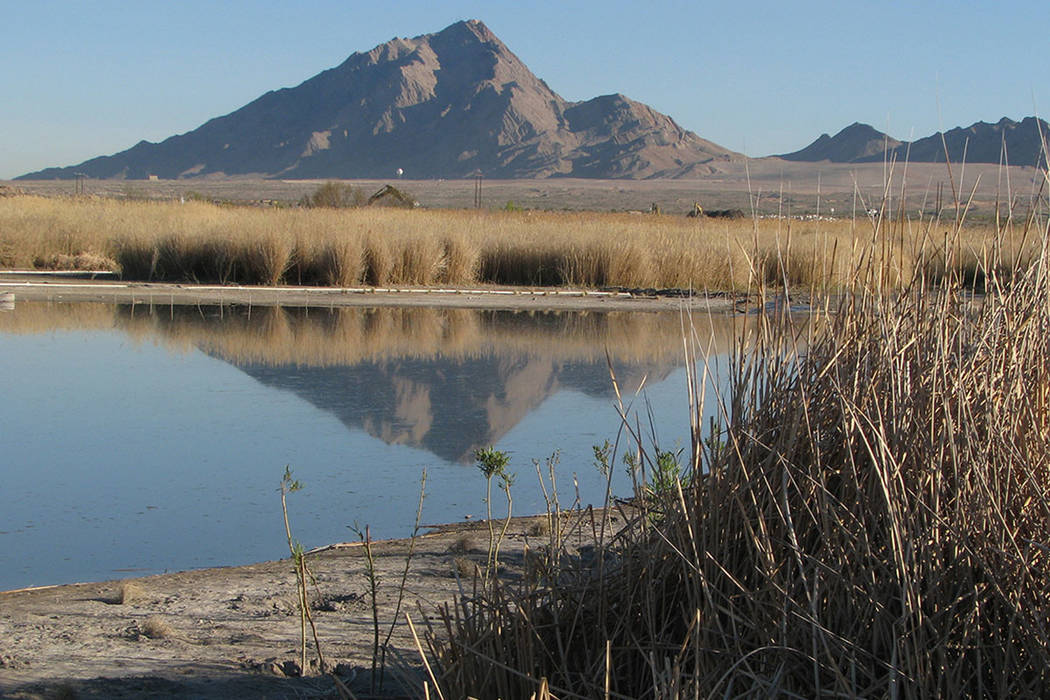 A view of Frenchman Mountain from the Clark County Wetlands Park, 7050 Wetlands Park Lane. (Las Vegas Review-Journal)