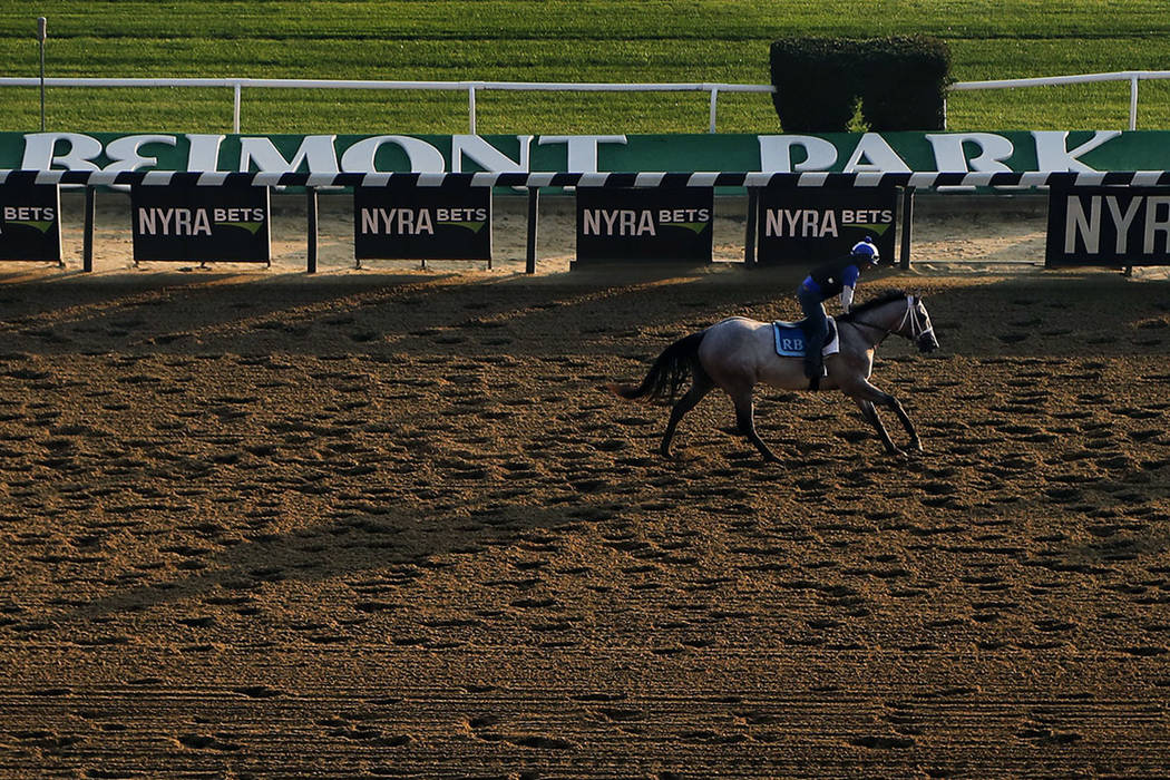 A Thoroughbred works out on the main track at Belmont Park, Friday, June 8, 2018, in Elmont, N.Y. The 150th running of the Belmont Stakes horse race is on Saturday. (AP Photo/Julie Jacobson)