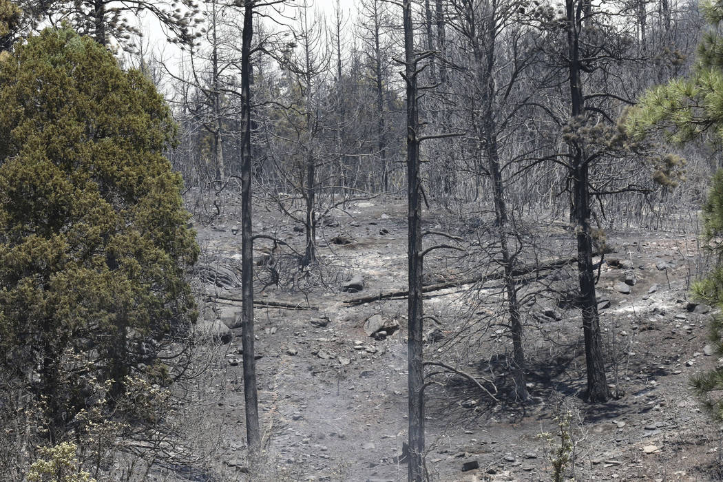 This Saturday, June 9, 2018 photo shows the results of a previous back burn to keep the the wildfire from advancing towards homes along County Road 201 near Hermosa, Colo. (Jerry McBride/The Duran ...