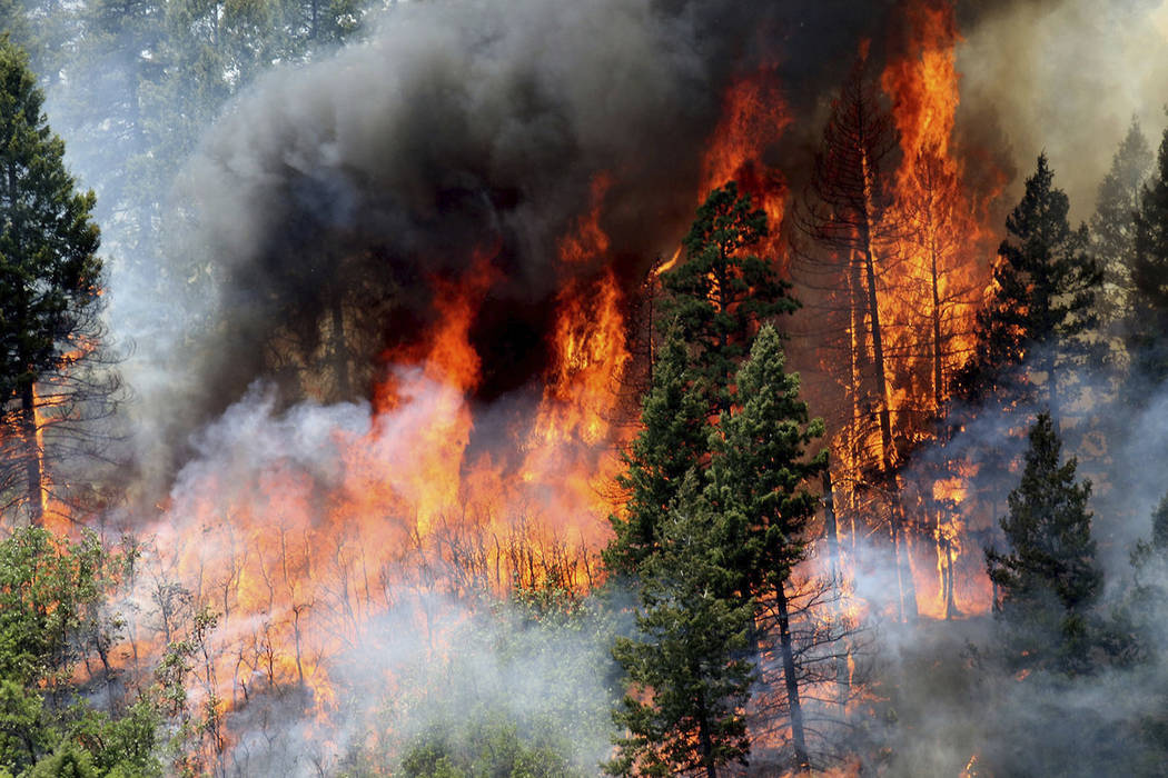 In this Monday, June 11, 2018, photo, flames consume trees during a burnout operation that was performed south of County Road 202 near Durango, Colo. Firefighters use the technique as a means to ...