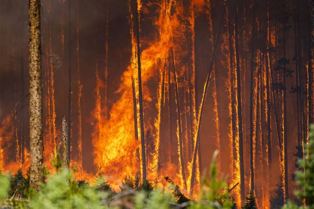 Flames engulf trees in the Wildernest neighborhood near Silverthorne, Colorado, Tuesday, June 12, 2018. (Hugh Carey/Summit Daily News via AP)