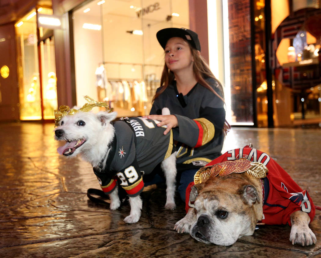 "Vegas Golden Knights fan Logan ""Logan the Girl with the Hat"" Sokoloski, poses with Bark-Andre Furry, left, and Washington Capitals fan Ovie the Bulldog at the Forum Shops at Caesars Tues ..."