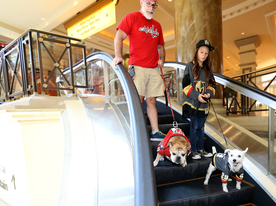 """Washington Capitals fans Mike Robertson with Ovie the Bulldog, left, and Vegas Golden Knights fans Logan """"Logan the Girl with the Hat"""" Sokoloski with Bark-Andre Furry go window shopping ..."""