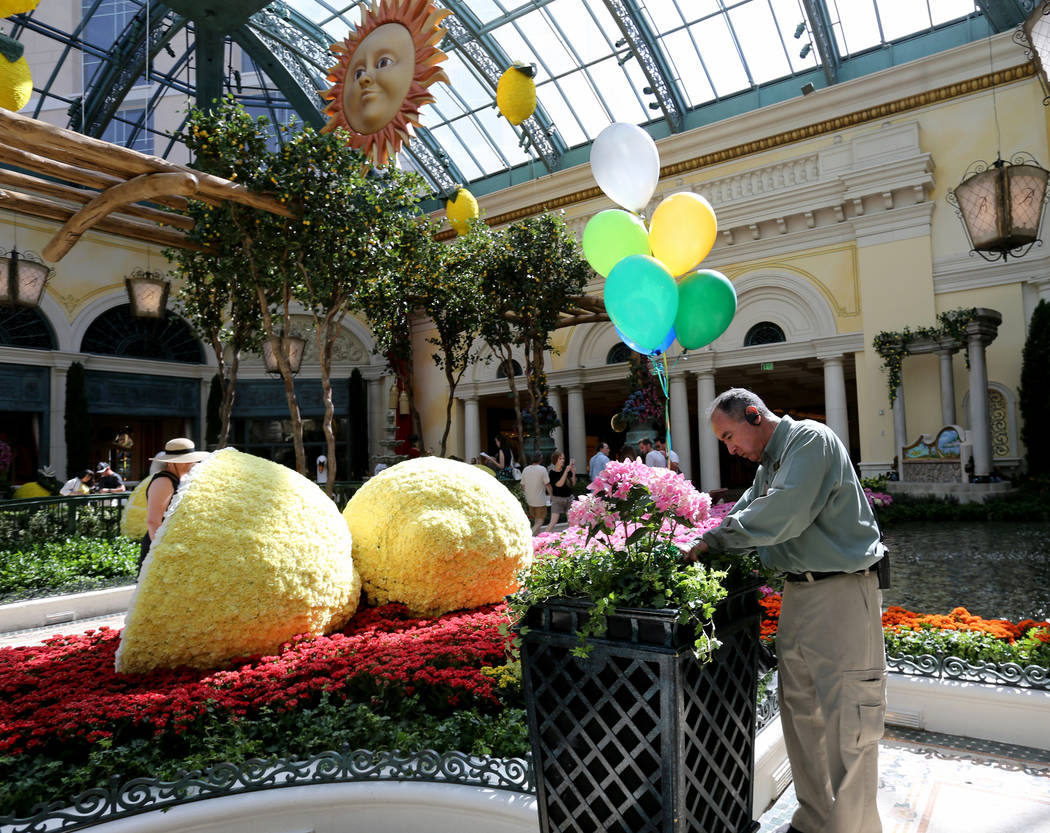 """Gardner Dwayne """"Mr. D."""" Whitworth attaches balloons to flowers at ÒThatÕs AmorŽ,Ó the Bellagio Conservatory's summer display Monday, June 18, 2018. The display, bas ..."""