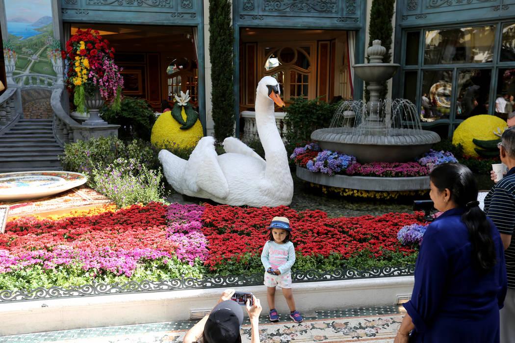 Rajvi Sham of Santa Monica, Calif. takes a photo of her daughter Kiara Sham, 2, ÒThatÕs AmorŽ,Ó the Bellagio Conservatory's summer display Monday, June 18, 2018. The display, ...