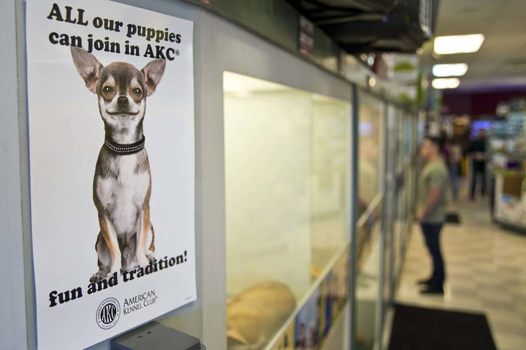 A sign advertises the pure-bred nature of the dogs for sale at Petland Las Vegas in Summerlin. (Daniel Clark/Las Vegas Review-Journal) @DanJClarkPhoto