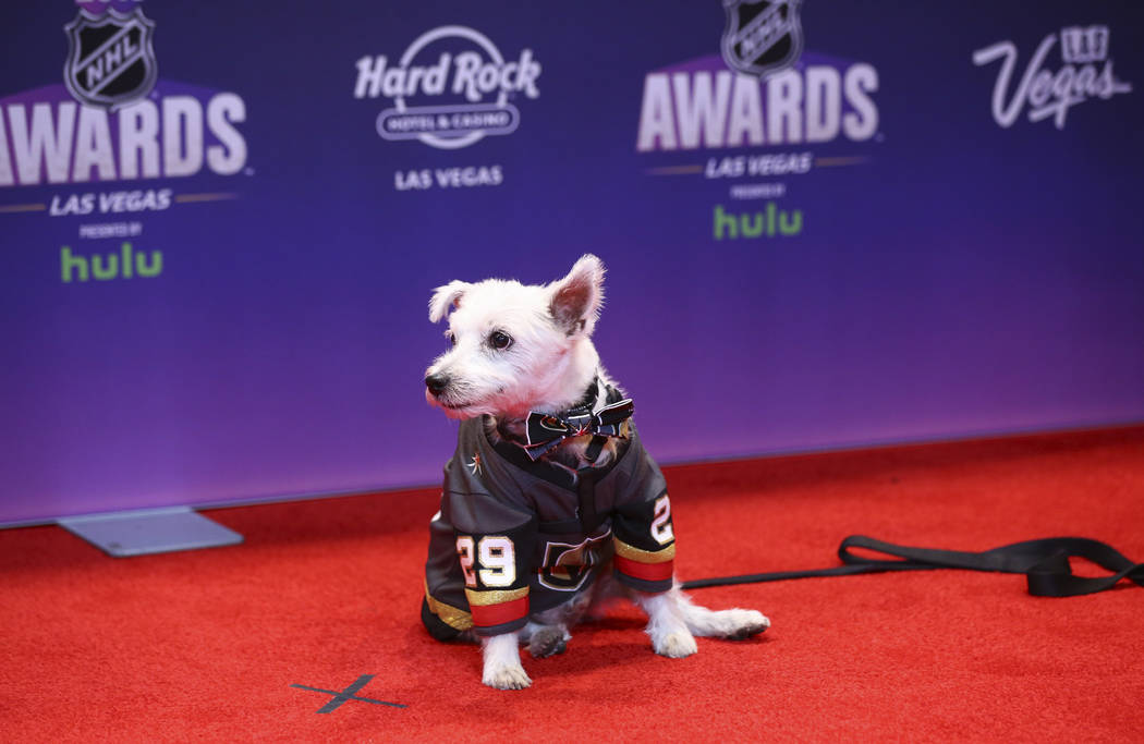 Bark-Andre Furry poses on the red carpet ahead of the NHL Awards at the Hard Rock Hotel in Las Vegas on Wednesday, June 20, 2018. Chase Stevens Las Vegas Review-Journal @csstevensphoto