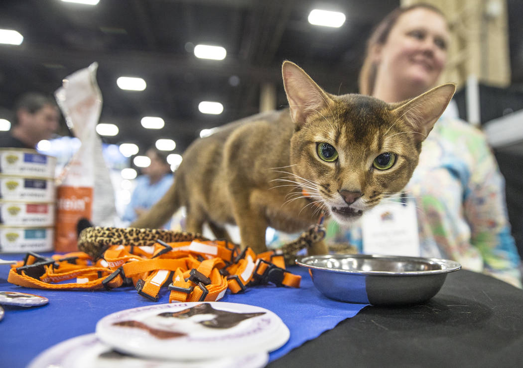 Kodak Moments has an afternoon snack with owner Jennifer Hardy with Dr. Elsey's Litter Box Solutions during SuperZoo, an annual trade show for pet retailers at the Mandalay Bay Convention Center o ...