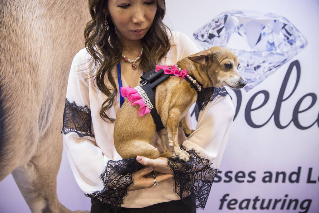 Eriko Liebers holds a Chihuahua named Wasabi wearing a leash made with Swarovski crystals during SuperZoo at the Mandalay Bay Convention Center on Tuesday, June 26, 2018, in Las Vegas. Benjamin Ha ...