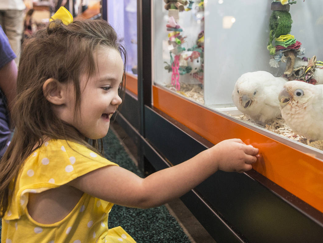 Eve Muno, 2, from St. George, Utah, looks at parrots during SuperZoo, an annual trade show for pet retailers at the Mandalay Bay Convention Center on Tuesday, June 26, 2018, in Las Vegas. Benjamin ...