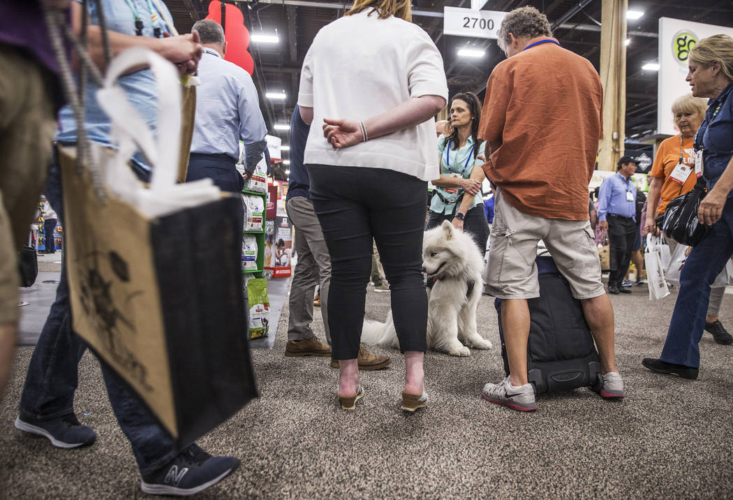 Samoyed Milo, middle, watches attendees during SuperZoo, an annual trade show for pet retailers at the Mandalay Bay Convention Center on Tuesday, June 26, 2018, in Las Vegas. Benjamin Hager Las Ve ...