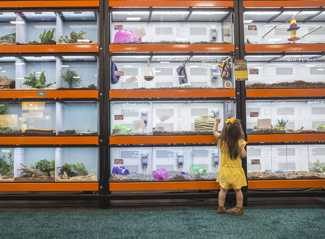 Eve Muno, 2, from St. George, Utah, looks at hamsters during SuperZoo, an annual trade show for pet retailers at the Mandalay Bay Convention Center on Tuesday, June 26, 2018, in Las Vegas. Benjami ...