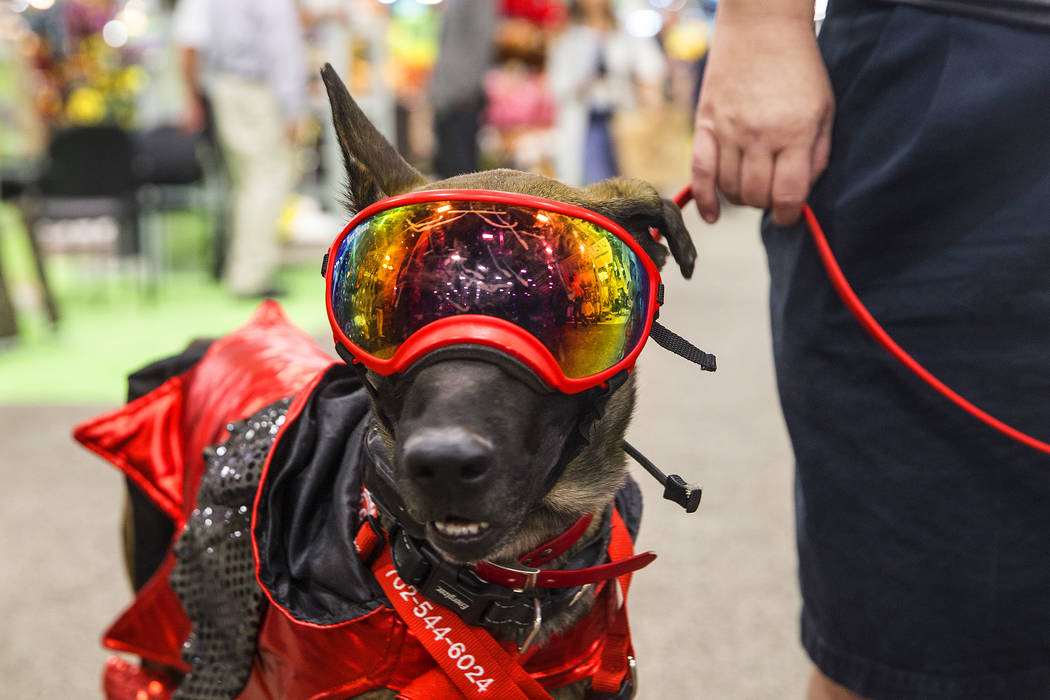 Shepard mix Shank takes in the scene during SuperZoo, an annual trade show for pet retailers at the Mandalay Bay Convention Center on Tuesday, June 26, 2018, in Las Vegas. Benjamin Hager Las Vegas ...