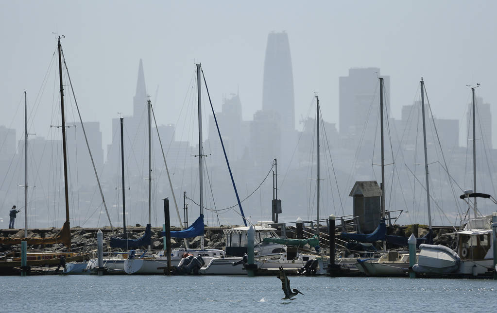 A brown pelican begins to fly after being released at Fort Baker Friday, June 29, 2018, in Sausalito, Calif. In the background is the San Francisco skyline. (AP Photo/Eric Risberg)
