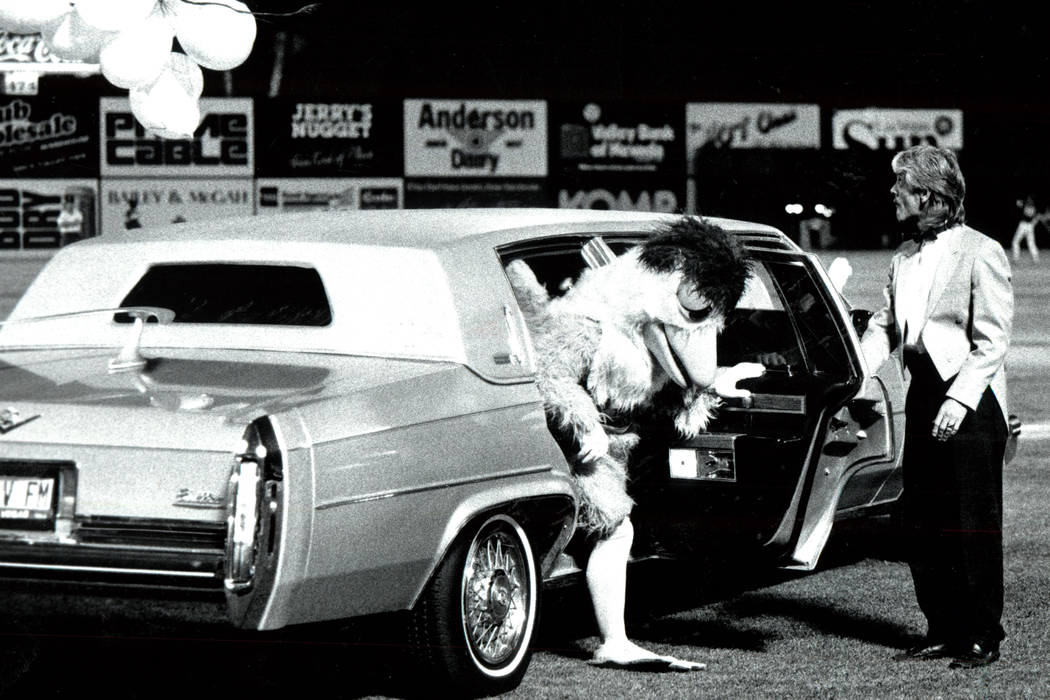 SAN DIEGO CHICKEN APRIL 27, 1990 Famous Chicken arrives at Cashman Field in Chauffeur driven Cadillac Limousine with a balloon fanfare. (WAYNE KODEY/LAS VEGAS REVIEW-JOURNAL)