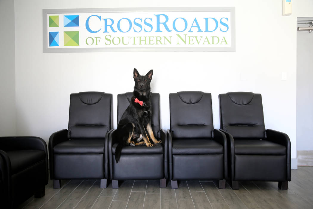 Dude the German shepherd at CrossRoads of Southern Nevada psychiatric urgent care facility at 2121 W. Charleston Blvd. in Las Vegas Wednesday, June 6, 2018. Dude is part of the K-9 unit at the fac ...