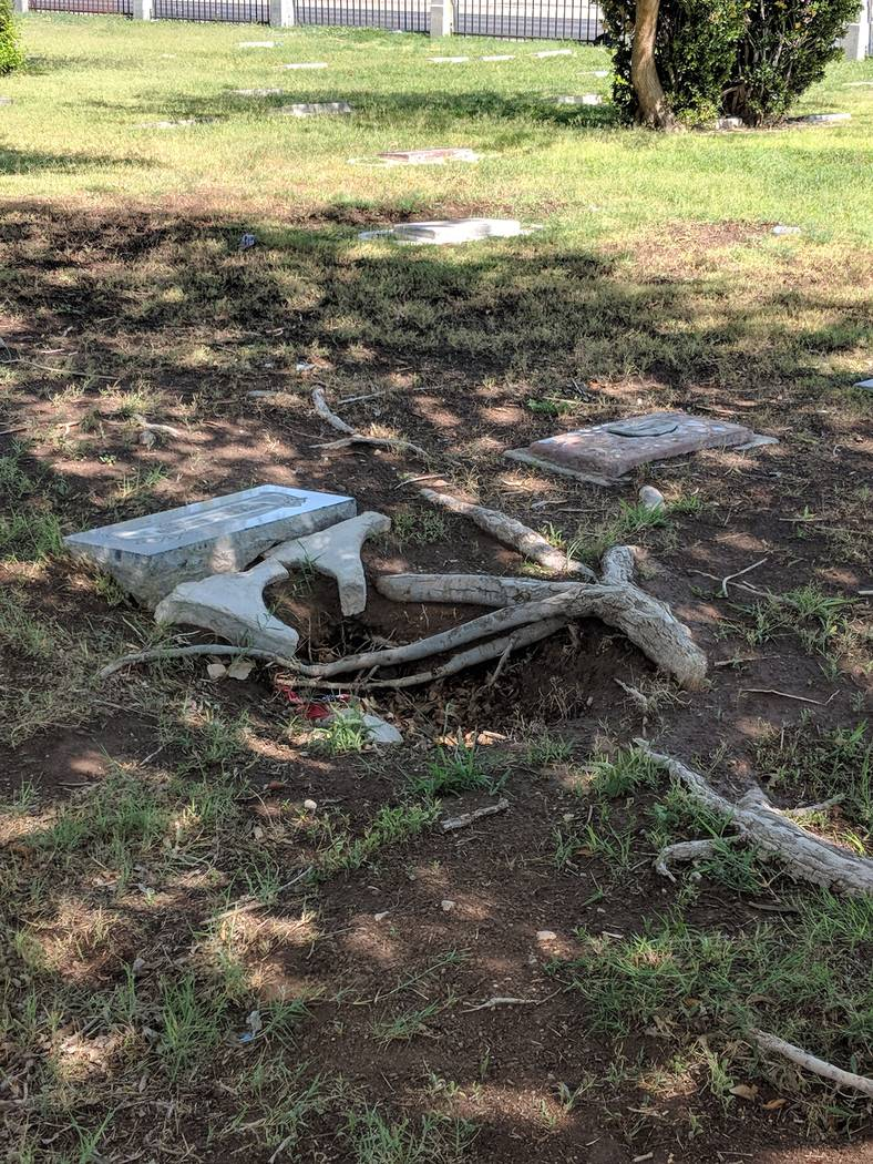 Tree roots snake among headstones in the O section of Woodlawn Cemetery, where a number of African Americans are buried in unmarked graves. Nevada African American Genealogy Society President and ...