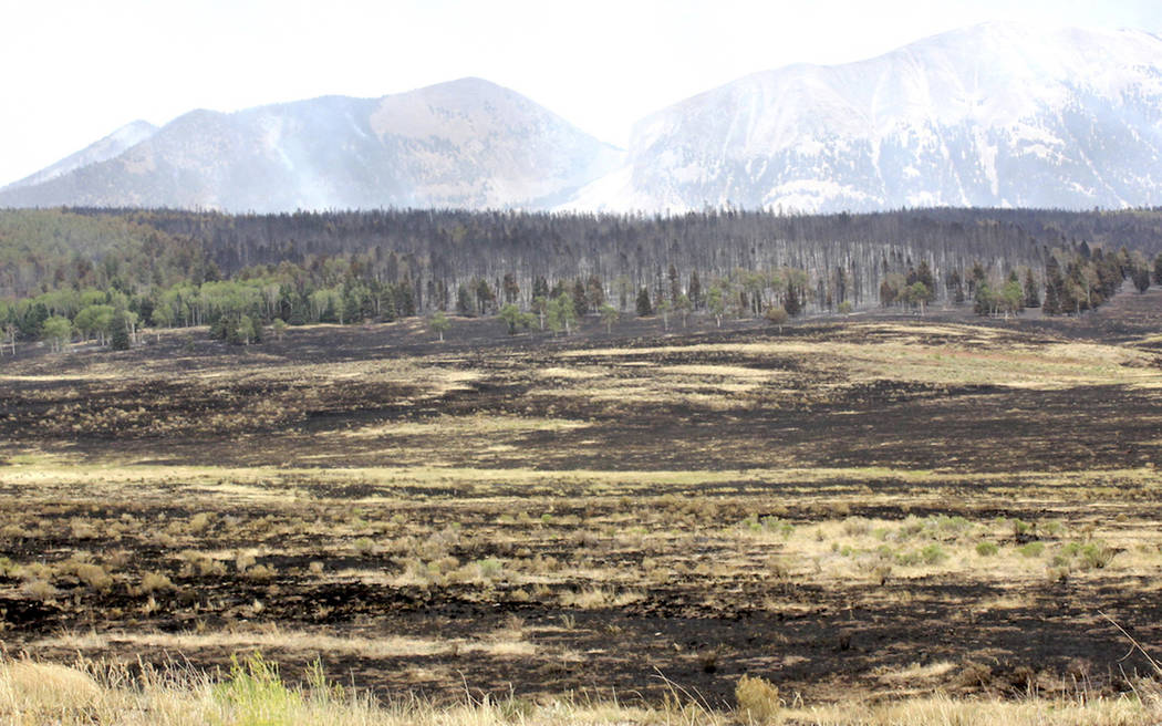 Charred land from the Spring Fire is shown during a tour of the wildfire Tuesday, July 3, 2018, near Fort Garland, Colo. The growing wildfire destroyed more than 100 homes in the Colorado mountain ...