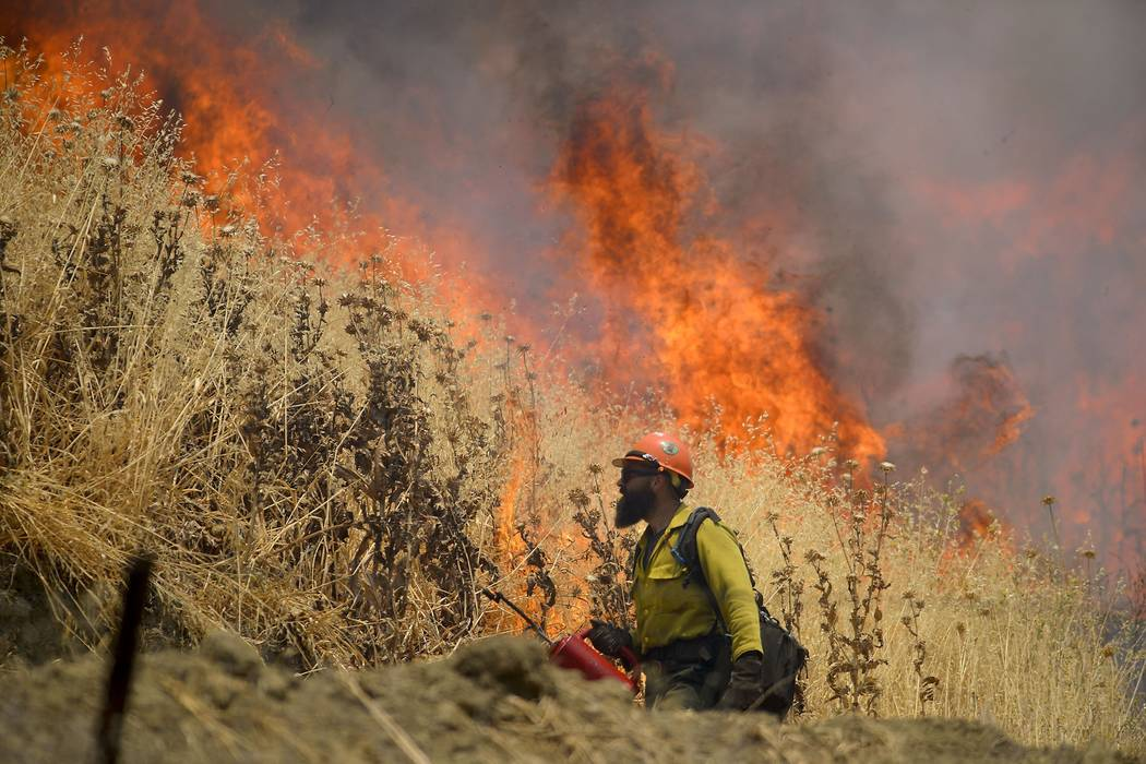 Hot Shot crews from Mendocino use backfires to help contain the County Fire along Highway 129 near Lake Berryessa in Yolo County, Calif, on Tuesday, July 3, 2018. Firefighters have been using airc ...