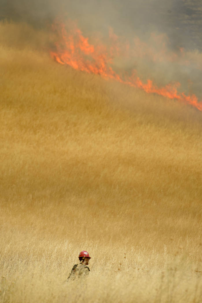 Hot Shot crews from Mendocino walk through a sea of tall dry grass to set backfires to help contain the County Fire along Highway 129 near Lake Berryessa in Yolo County, Calif. on Tuesday, July 3, ...