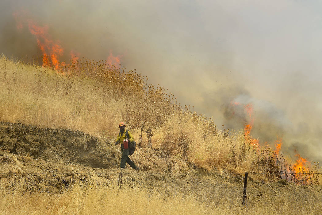 Hot Shot crews from Mendocino use backfires to help contain the County Fire along Highway 129 near Lake Berryessa in Yolo County, California, Tuesday, July 3, 2018. (Randall Benton/The Sacramento ...