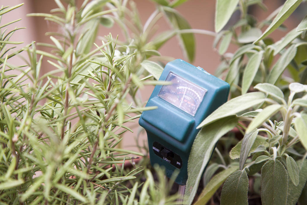 A moisture meter will let you know if your garden needs more water. (Thinkstock)