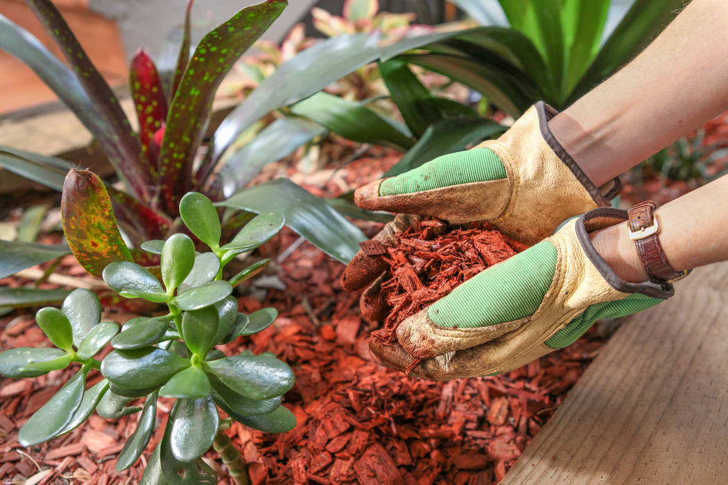Wood mulch will shade soil from the sun and eventually break down over time adding compost to the soil. (Thinkstock)