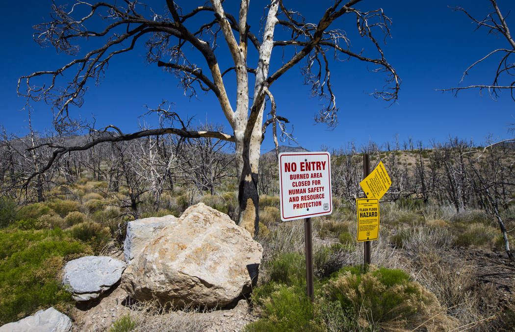 Signs along Harris Mountain Road display warnings following the Carpenter 1 fire in the Spring Mountains National Recreation Area on Friday, July 6, 2018. Chase Stevens Las Vegas Review-Journal @c ...