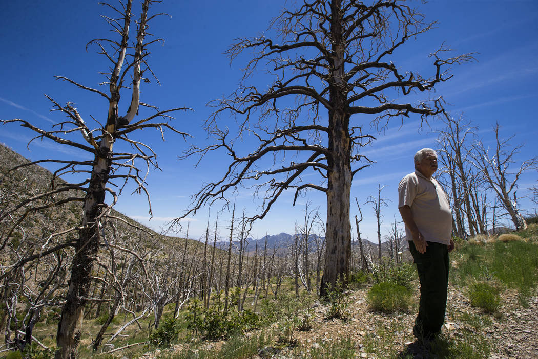 James Hurja, U.S. Forest Service soil scientist, surveys the aftermath of the Carpenter 1 fire in the Spring Mountains National Recreation Area on Friday, July 6, 2018. Chase Stevens Las Vegas Rev ...