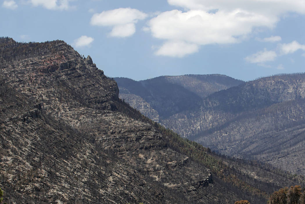 The forest behind Trout Canyon, seen in July 2013, was burned during the Carpenter 1 fire. (Las Vegas Review-Journal)