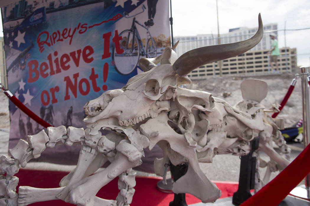 A motorcycle by Resse Moore, of Orange City, Florida is made entirely out of animal bones. It was on display at the Ripley's Believe It Or Not exhibit at the Evel Live event where Travis Pastrana ...