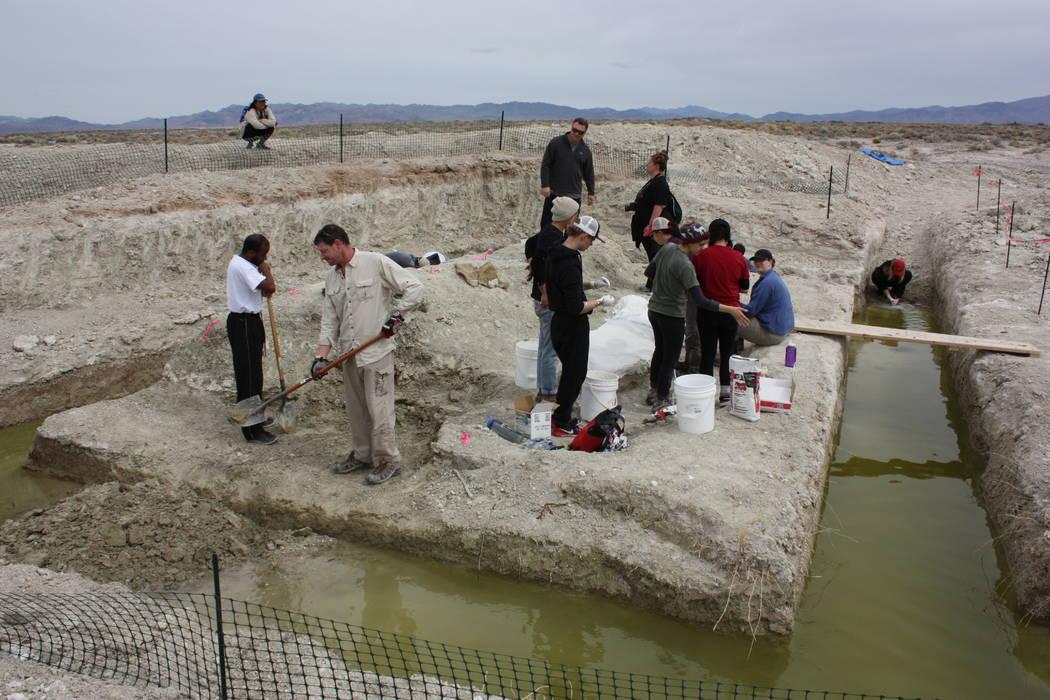 UNLV students excavate mammoth bones about 100 miles northwest of Las Vegas in March. (Steve Rowland)