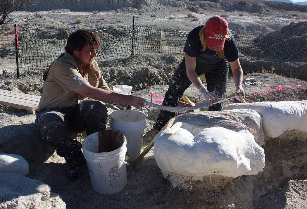 UNLV graduate Cameron Rickerson, left, and graduate student Becky Humphrey apply plaster-soaked strips of burlap to a mammoth fossil at a dig site about 100 miles northwest of Las Vegas. (Steve Ro ...