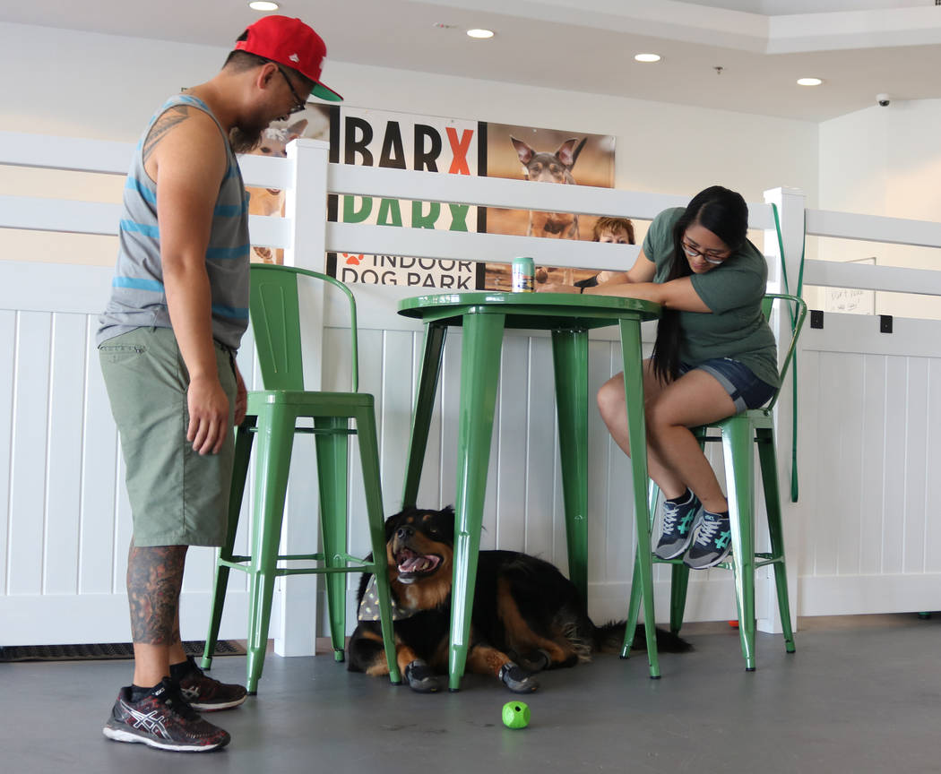 Owners play with their dog at Barx Parx, a new indoor dog park, in Henderson on Saturday, July 7, 2018. (Rochelle Richards/Las Vegas Review-Journal) @RoRichards24