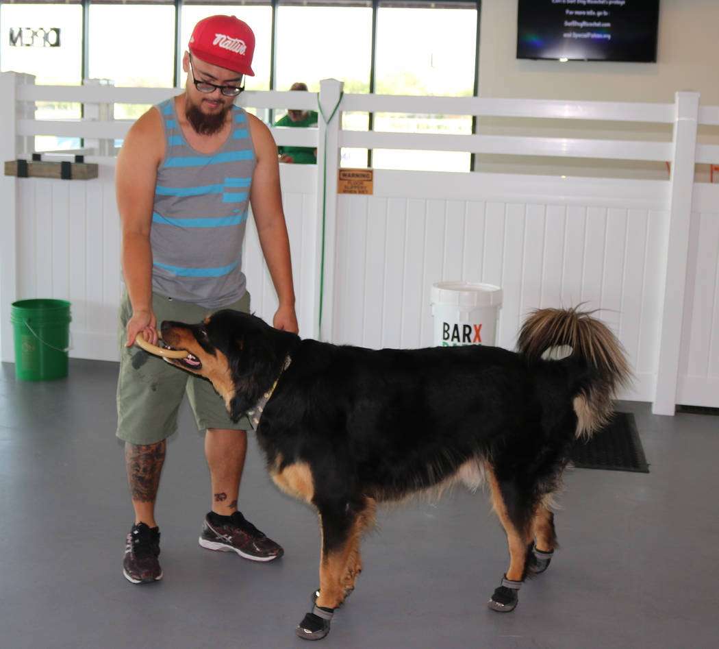 An owner plays with his dog at Barx Parx, a new indoor dog park, in Henderson on Saturday, July 7, 2018. (Rochelle Richards/Las Vegas Review-Journal) @RoRichards24