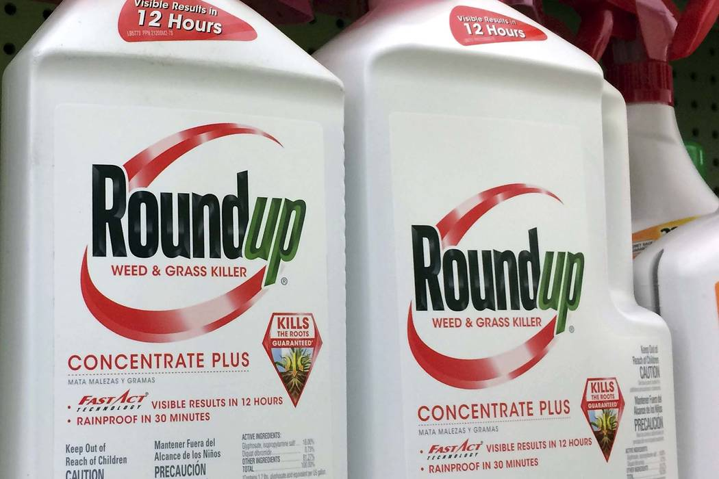 Lawyers for a school groundskeeper dying of cancer asked a San Francisco jury during a trial Monday, July 9, 2018, to find that agribusiness giant Monsanto's widely used weed killer Roundup likely ...