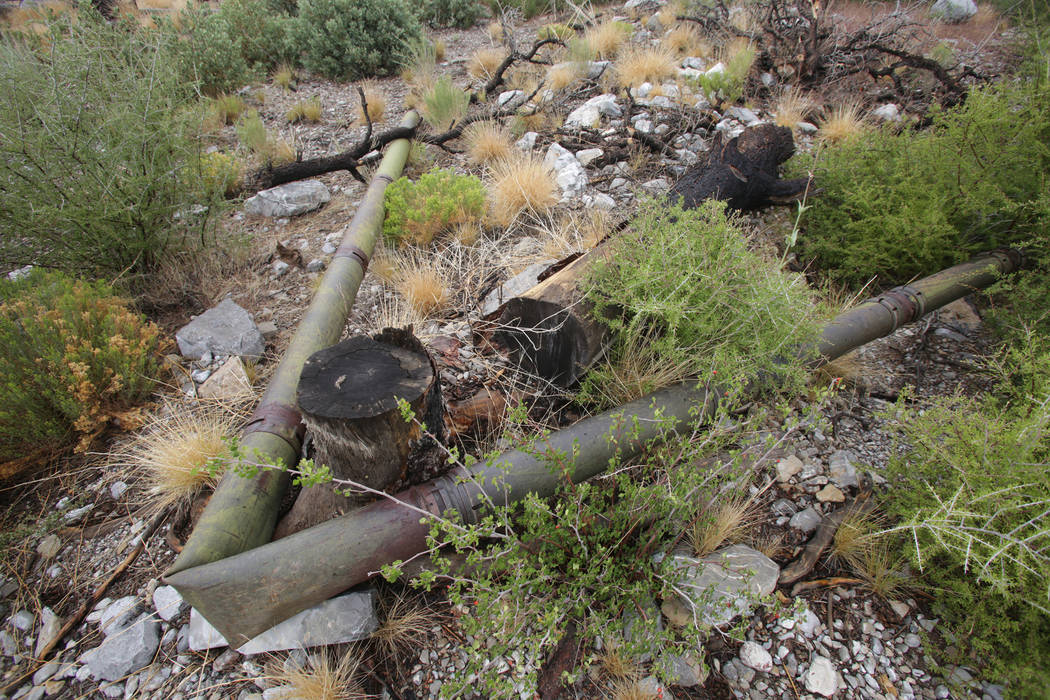 Remnants of the original pipeline for Trout Canyon's water supply, constructed by Elmer Bowman out of brass shell casings, wrap around a tree trunk after heavy rains washed away the system ...