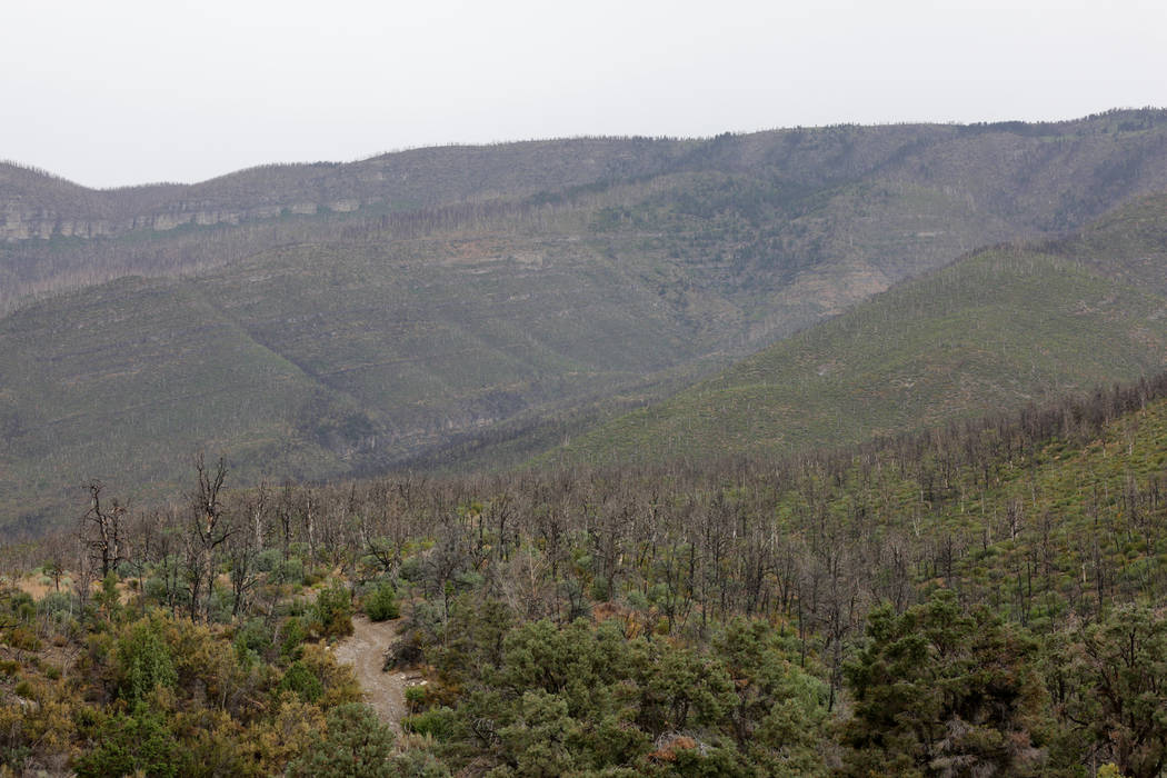 After five years, Trout Canyon still shows scars from the 2013 Carpenter 1 fire on Thursday, July 12, 2018. Michael Quine/Las Vegas Review-Journal @Vegas88s