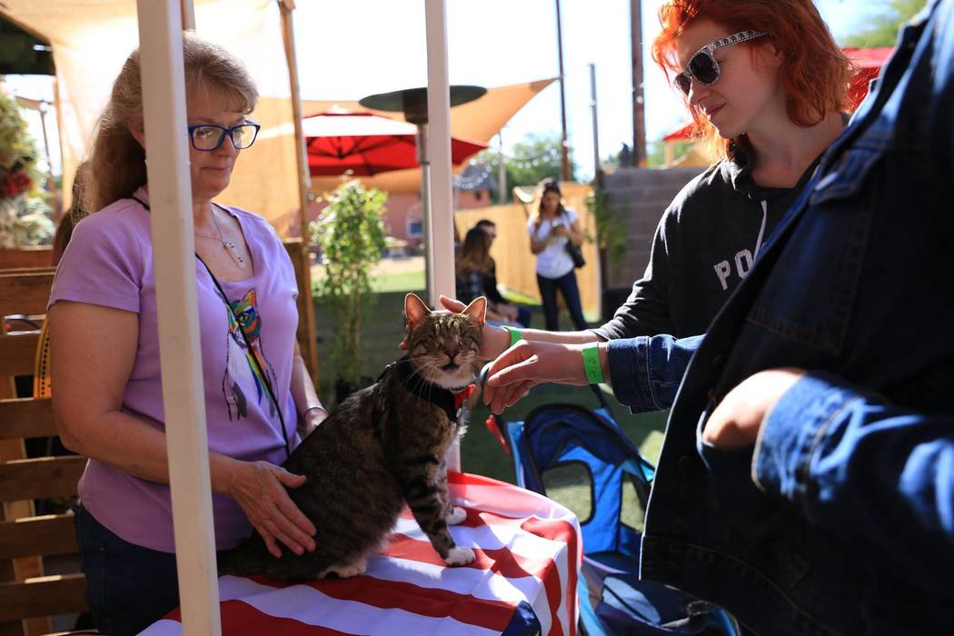 "Meow or Never has held two pop-up events in Las Vegas to help adopt cats and raise money for a brick and mortar cafe in the southwest valley. The event was held at the ""Market in the Alley"" event ..."
