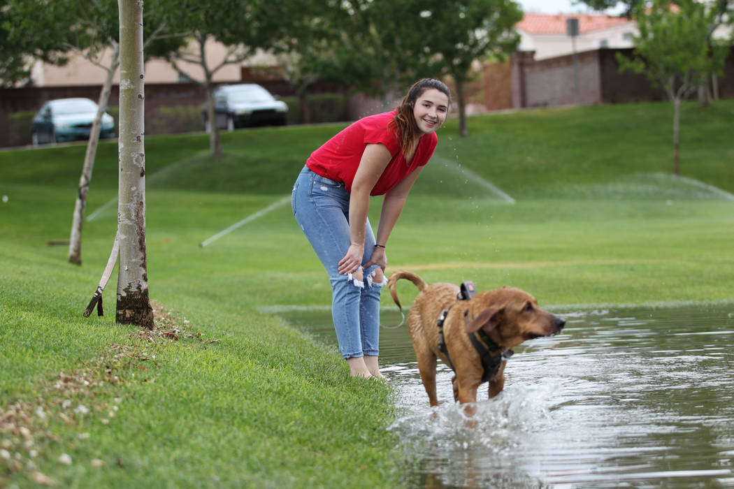 Hannah Fleming, 20, of Henderson, plays with her dog Cooper at a park off Wagonwheel Drive and Old Vegas Trail near U.S. Highway 95 in Henderson, Thursday, July 12, 2018. Erik Verduzco Las Vegas R ...