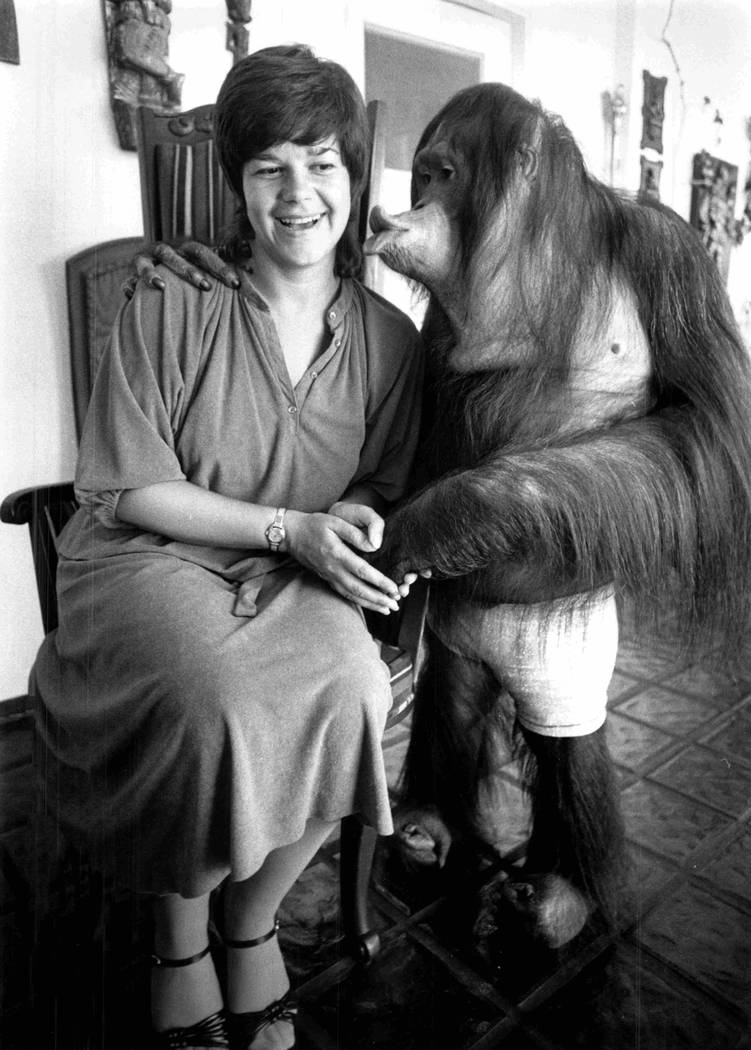 While a feature writer for The Nevadan between 1976-1978, Jane Ann Morrison met one of Bobby Berosini's orangutans. In 1989, he was taped striking his animals, ending his career at an entertainer ...