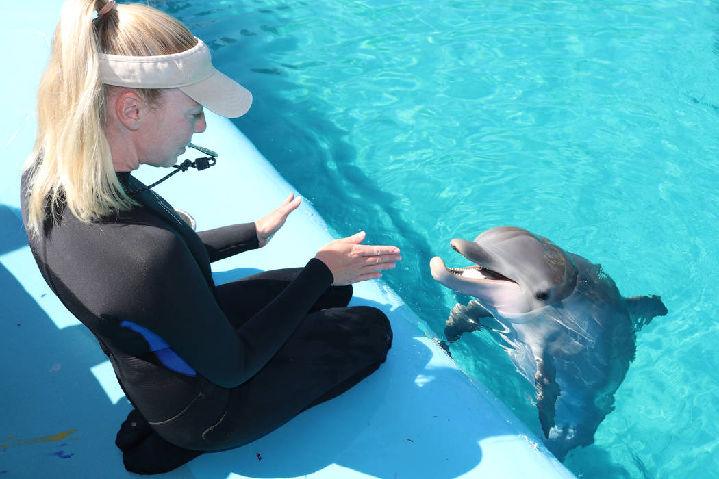Dolphin care specialist Lacey Russell interacts with dolphin calf, Coco, at The Mirage's Siegfried and Roy's Secret Garden and Dolphin Habitat on July 11, 2018 in Las Vegas. (Rochelle Richards/Las ...