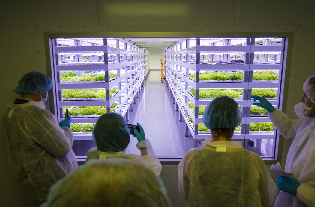 Dustin Wanders, a grow room supervisor, far right, gives a tour at Oasis Biotech, an indoor farming company, during the grand opening event in Las Vegas on Wednesday, July 18, 2018. Chase Stevens ...