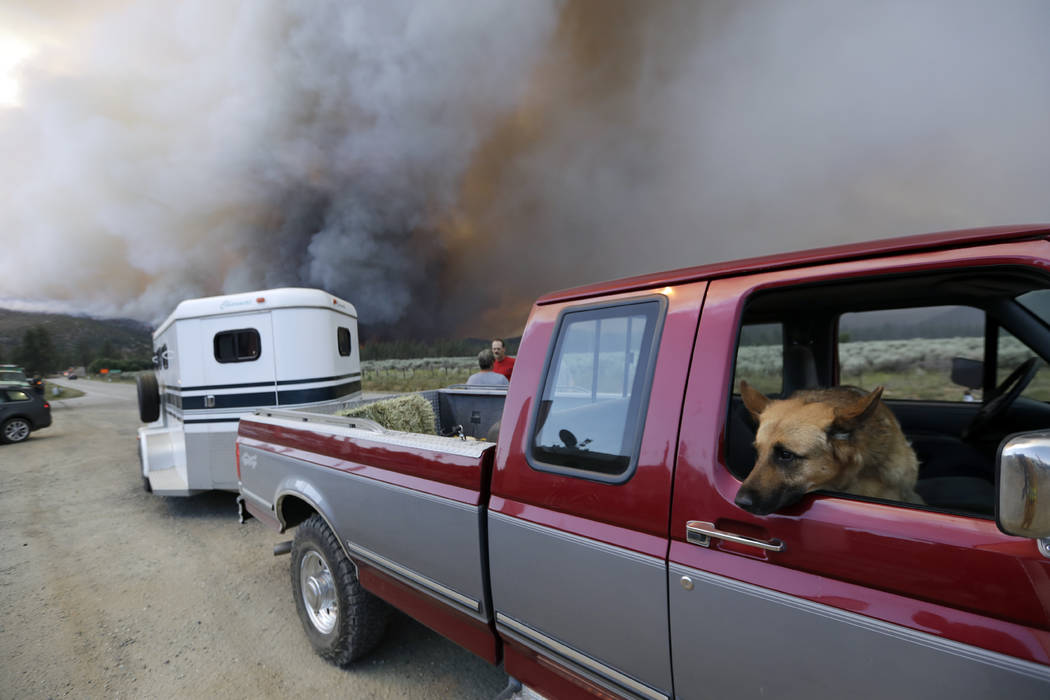 A dog sits inside the passenger seat of a pick up truck as residents evacuate from an approaching wildfire, Thursday, July 26, 2018, in Mountain Center, Calif. A fast-moving wildfire, believed to ...